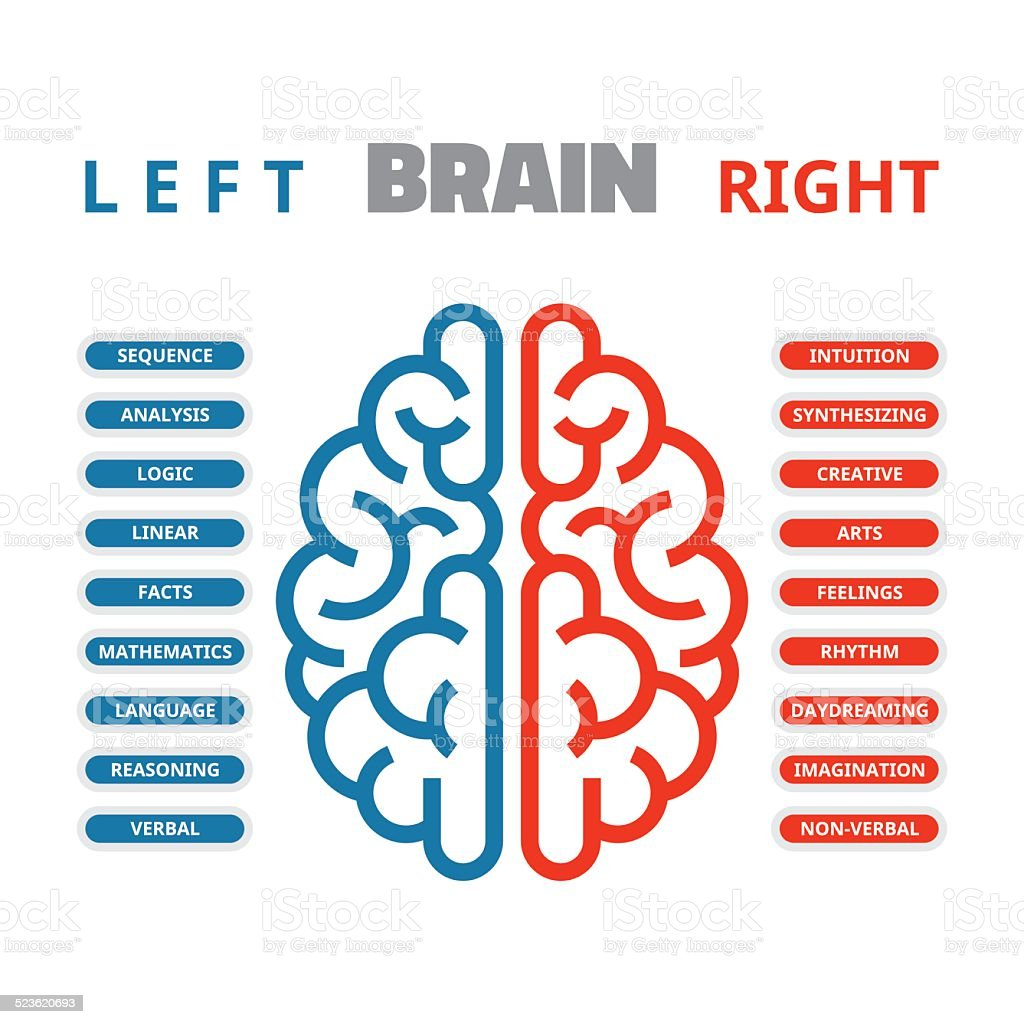 Left and right human brain vector illustration vector art illustration