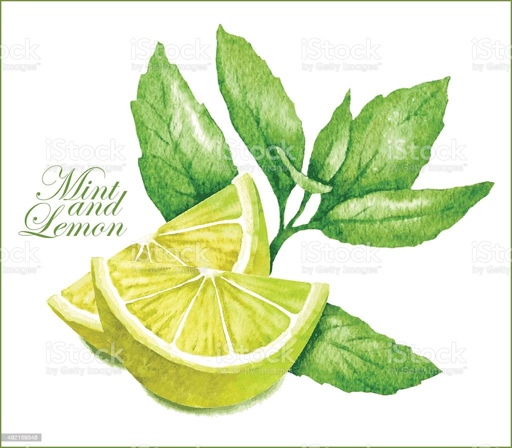 Lemon and mint sketches. vector art illustration