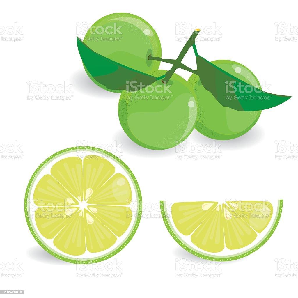 Lemon fruits vector art illustration