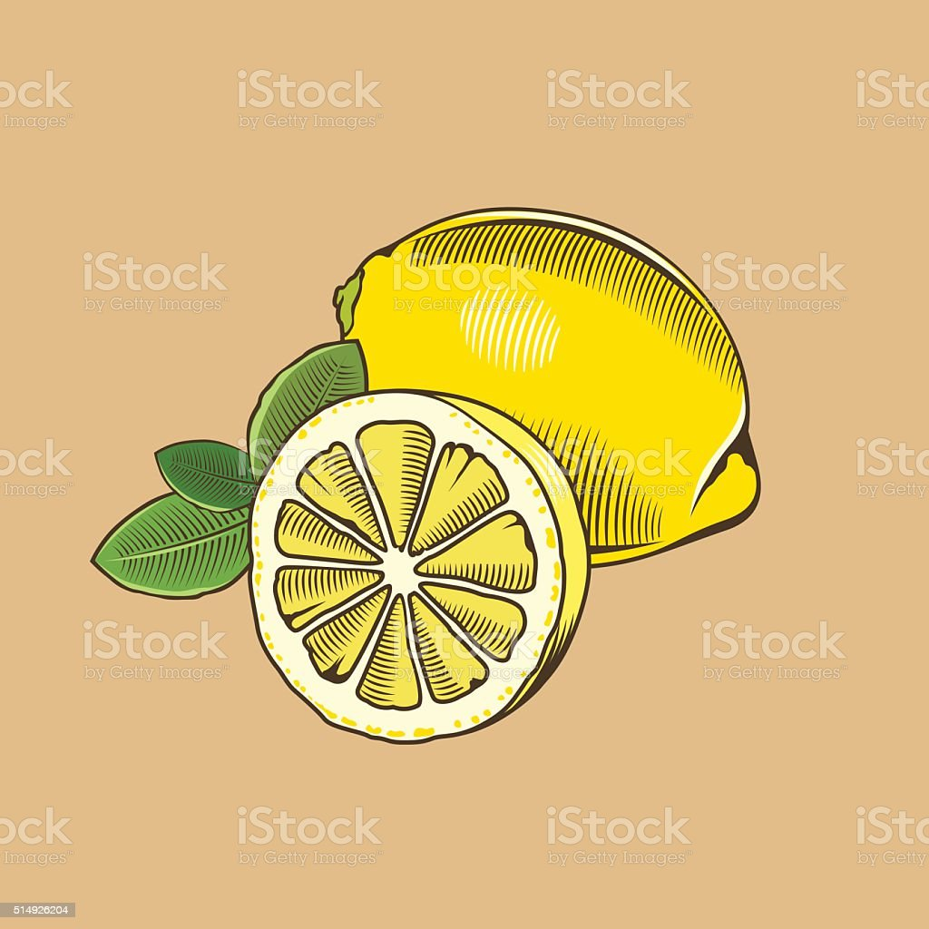 Lemon in vintage style. Colored vector illustration vector art illustration