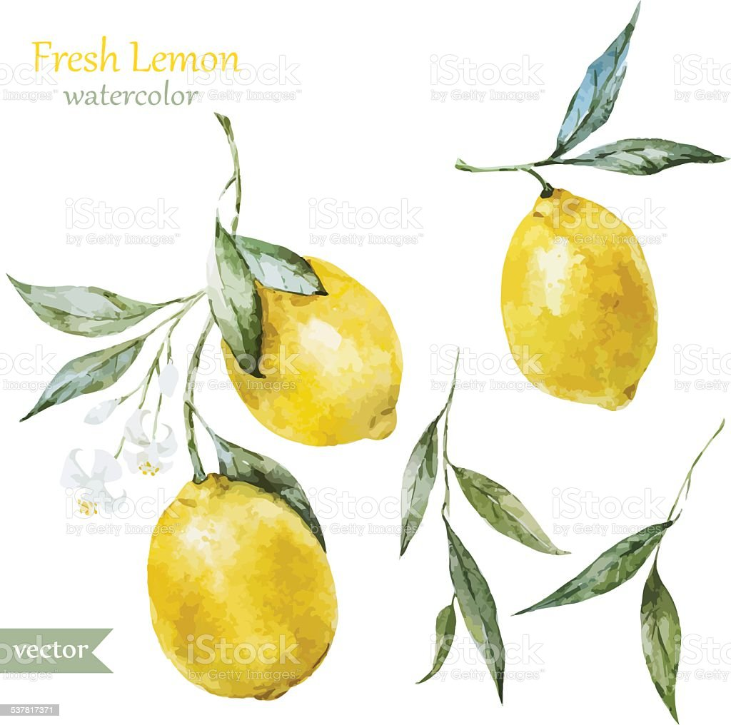 Lemon pattern vector art illustration