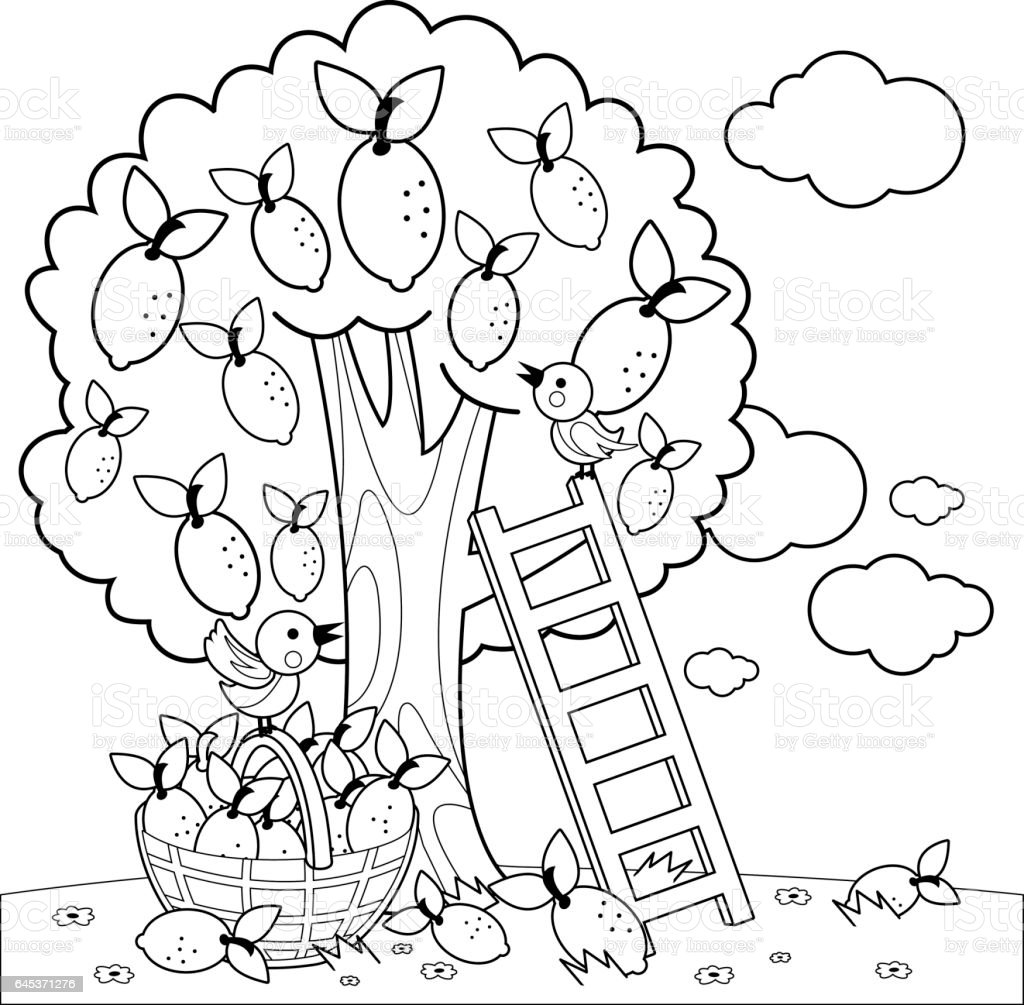 lemon tree harvesting coloring book page stock vector art