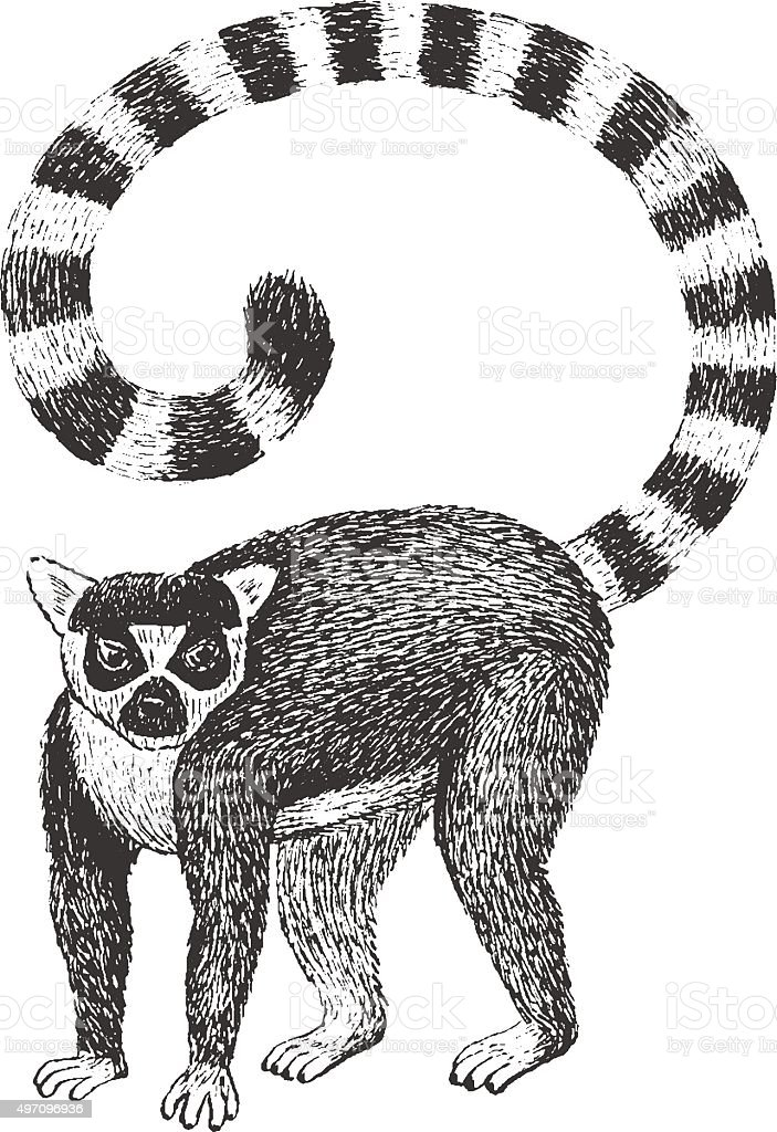Lemur Engraving Illustration vector art illustration