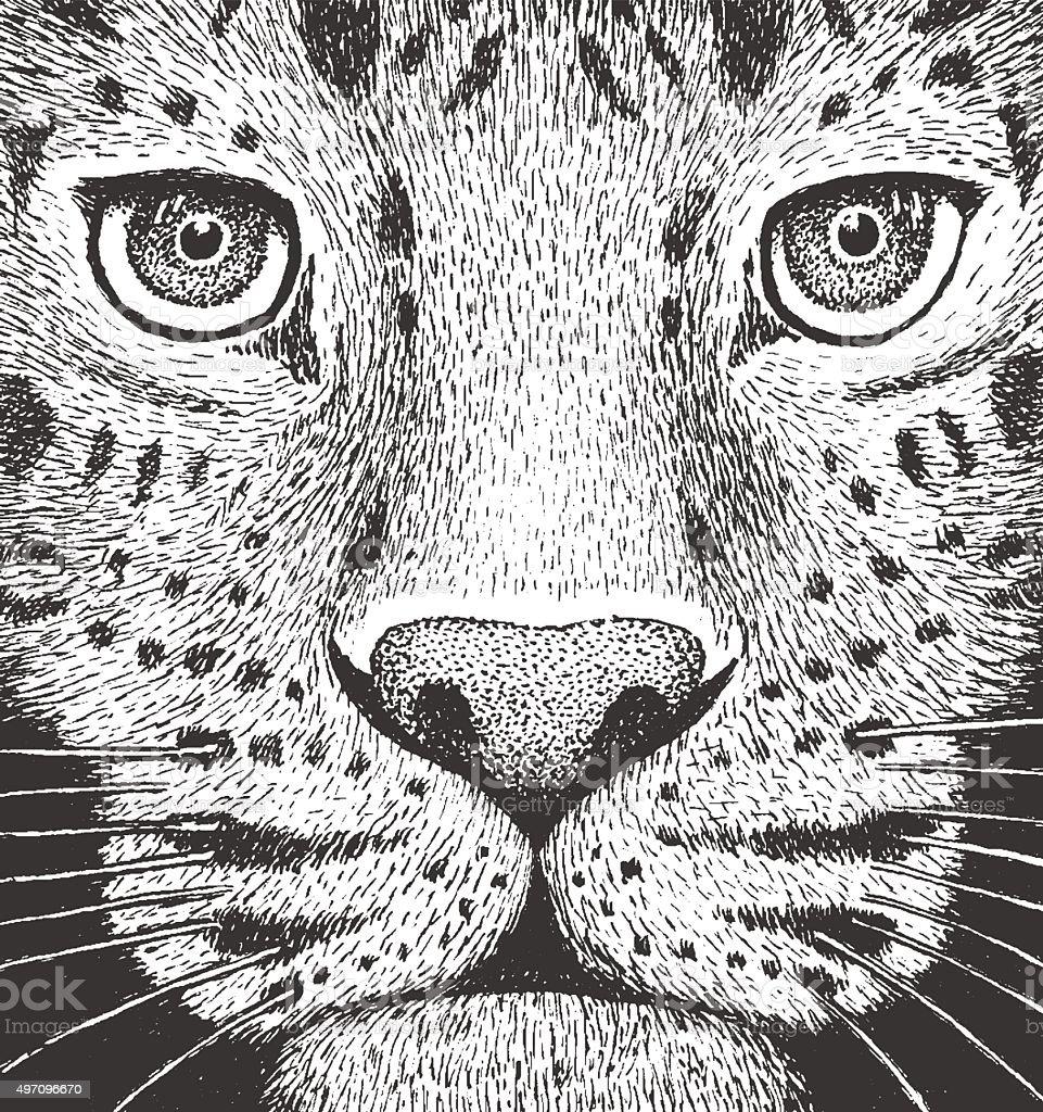 Leopard Engraving Illustration vector art illustration