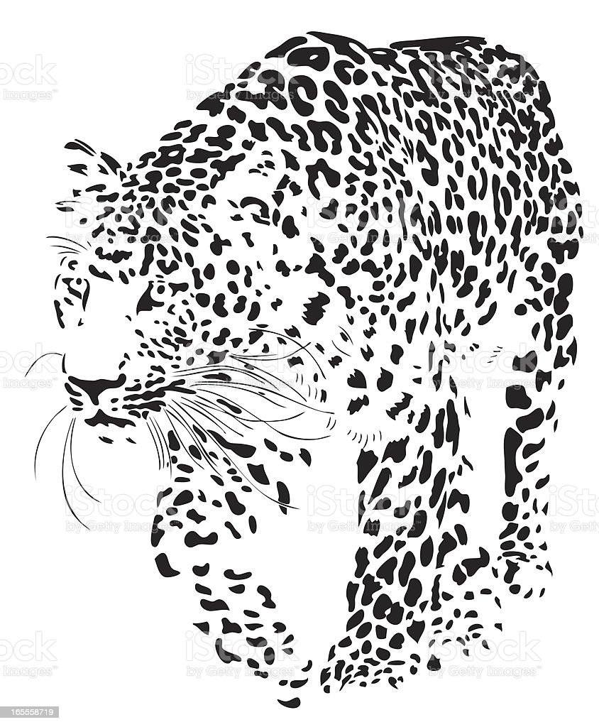 Leopard illustration (Panthera pardus) vector art illustration