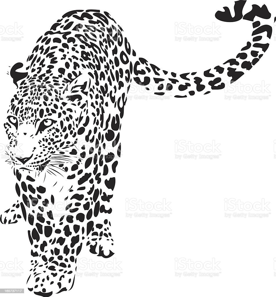 Leopard illustration (Panthera pardus) vector art illustration