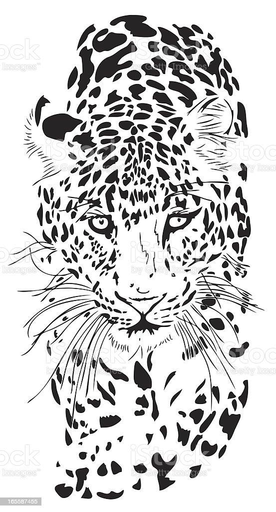 Leopard portrait (Panthera pardus) vector art illustration