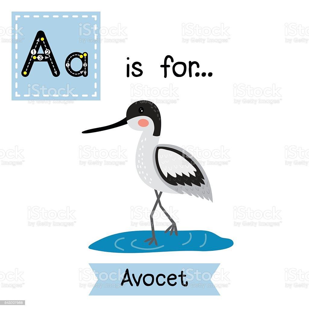 Letter A tracing. Avocet. vector art illustration