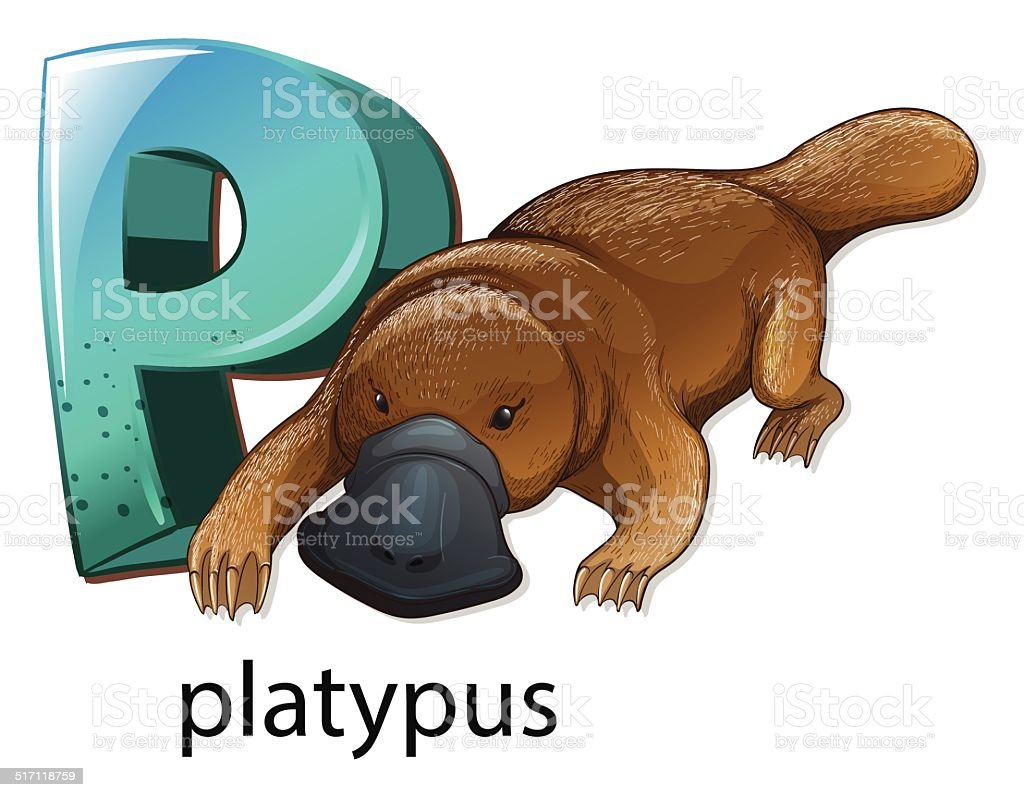 Letter P for platypus vector art illustration