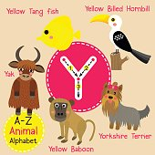 Letter Y tracing. Yak. Yorkshire Terrier. Baboon. Yellow Billed Hornbill.
