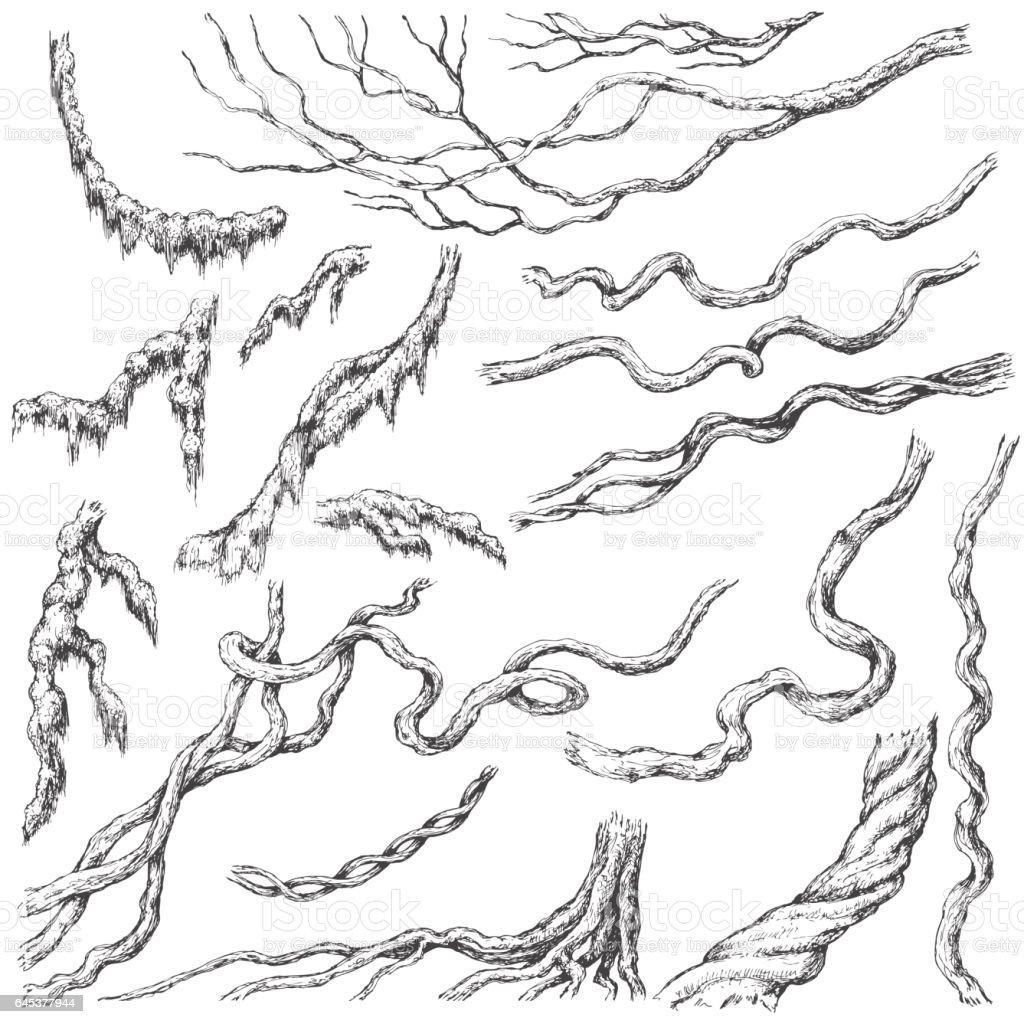Liana Branches Sketch vector art illustration