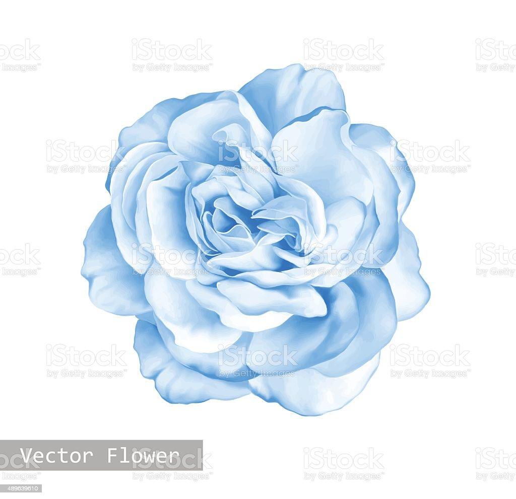 light blue rose flower stock vector art 489639610 istock