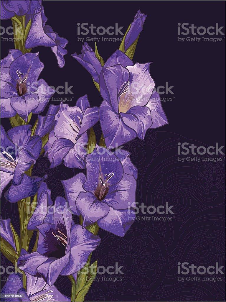 Lilac gladiolus vector art illustration