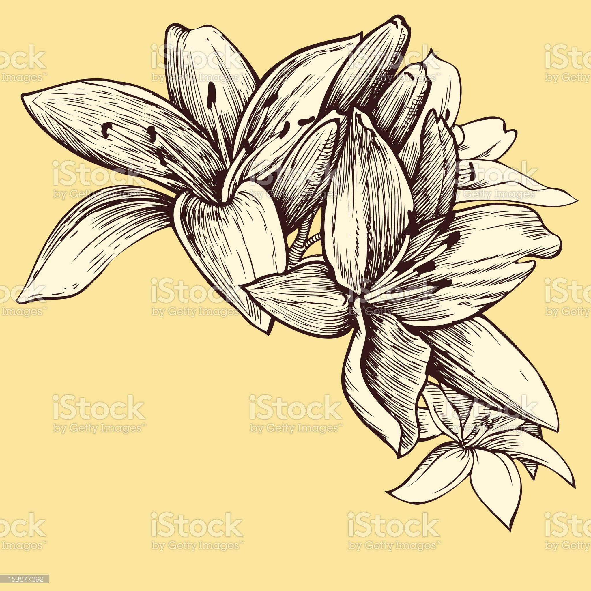 Lilies. Flower Line Art. royalty-free stock vector art