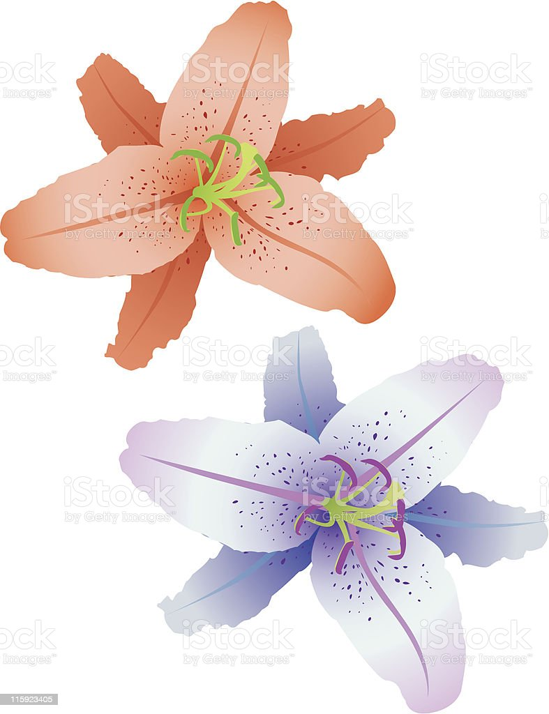 Lilies royalty-free stock vector art
