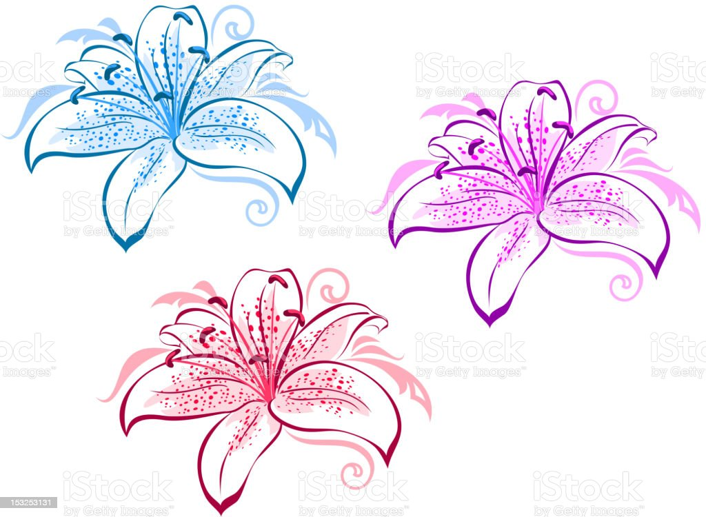 Lily flowers set vector art illustration