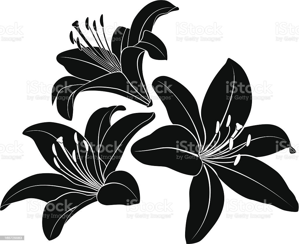 Lily silhouette vector art illustration