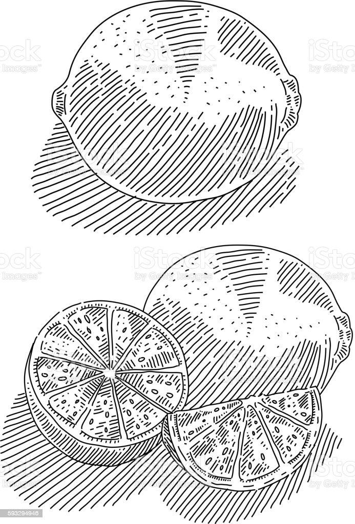 Lime Drawing vector art illustration