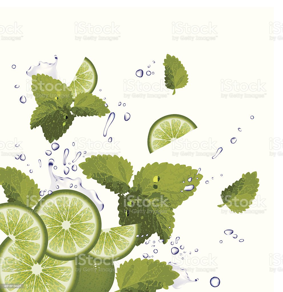 Lime, Mint and splash of water vector art illustration