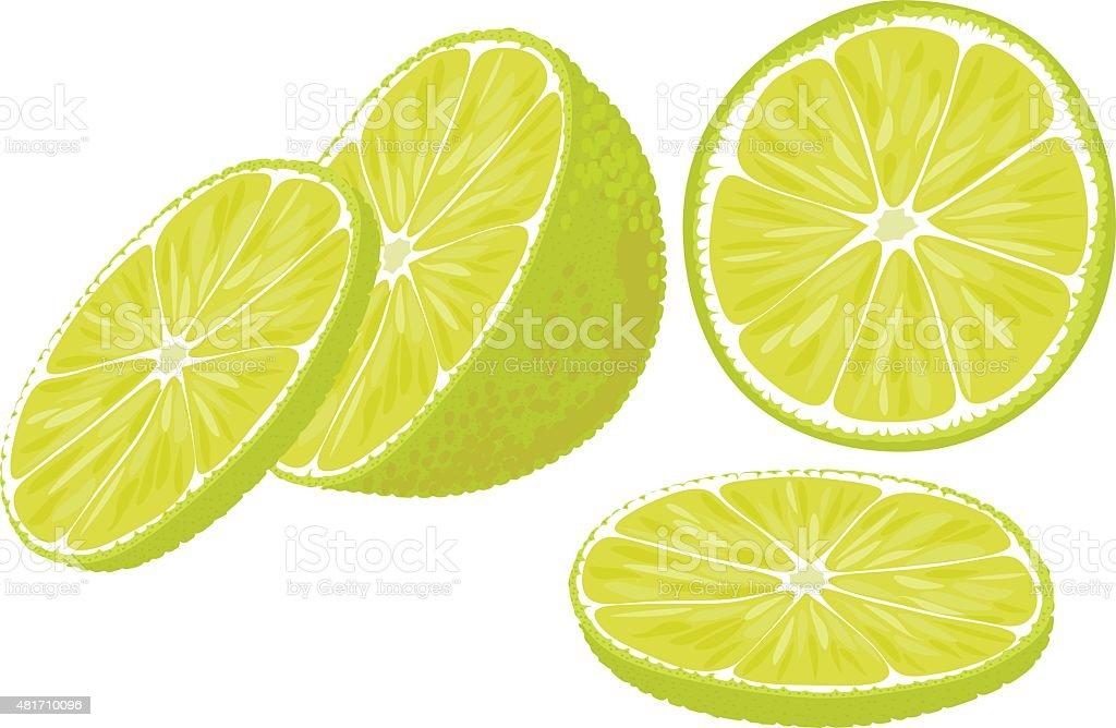 Lime slices. vector art illustration