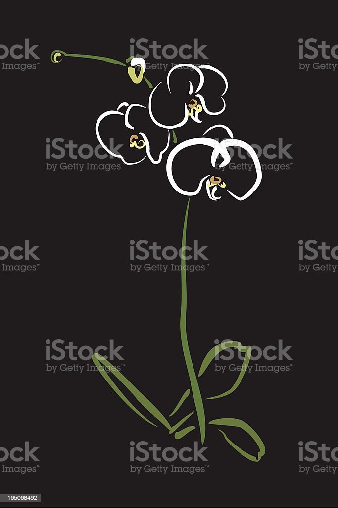 Line art of Phalaenopsis orchid on black background royalty-free stock vector art