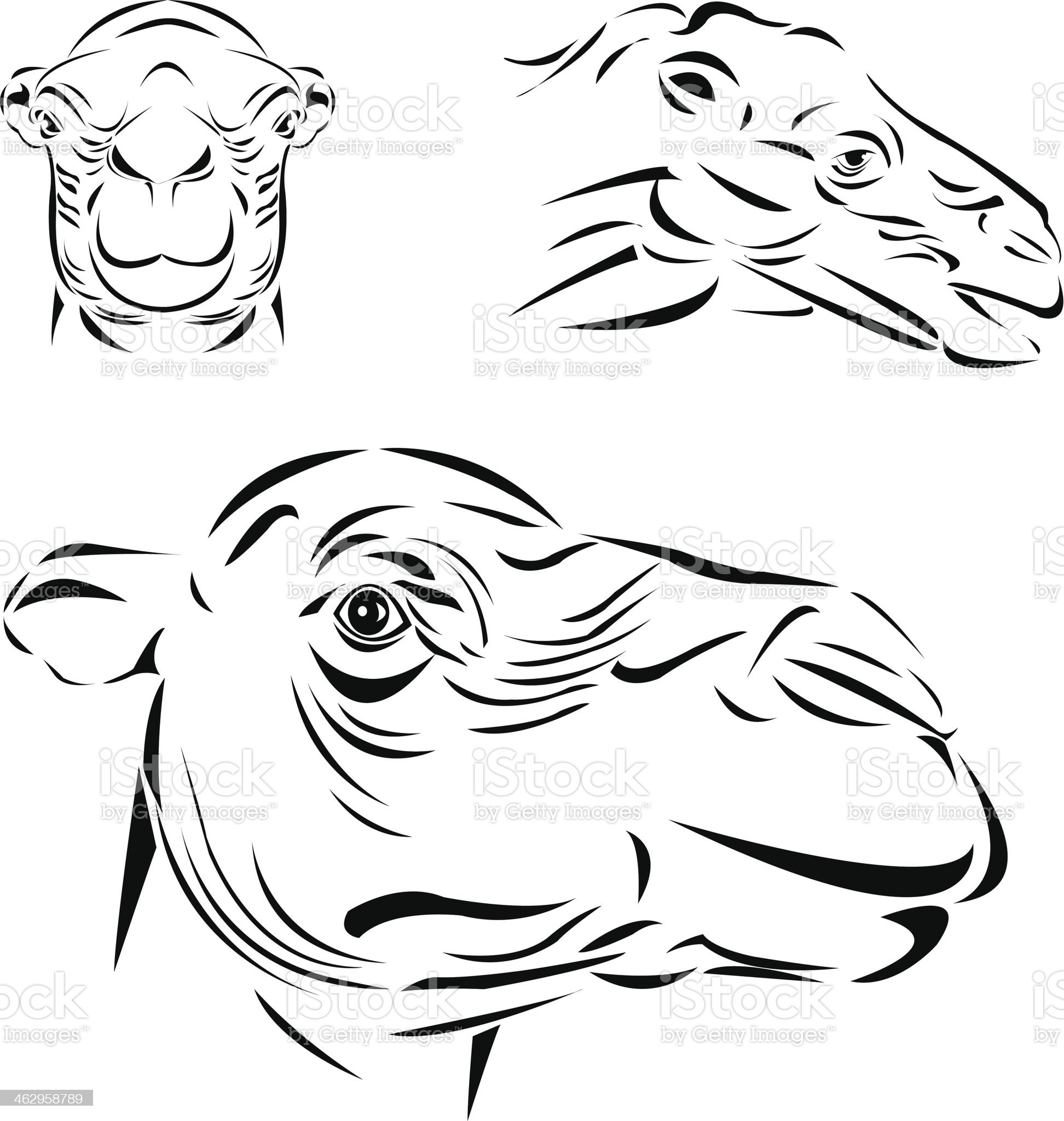 Line art_Camel royalty-free stock vector art