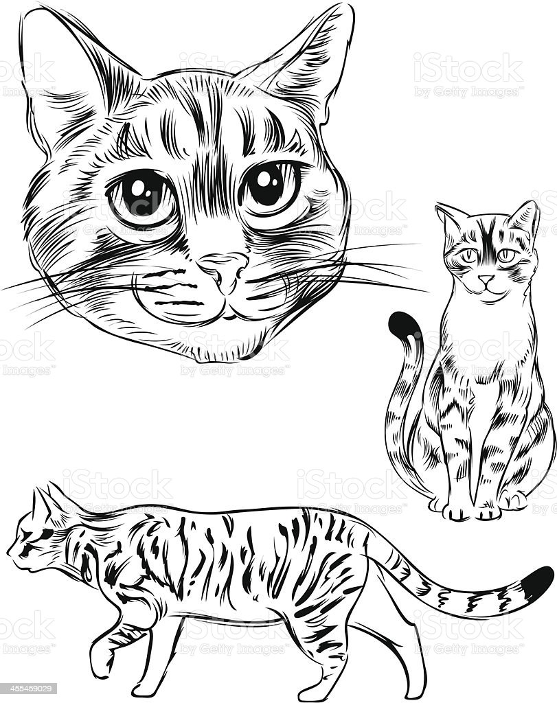 Line drawing of a Cat vector art illustration