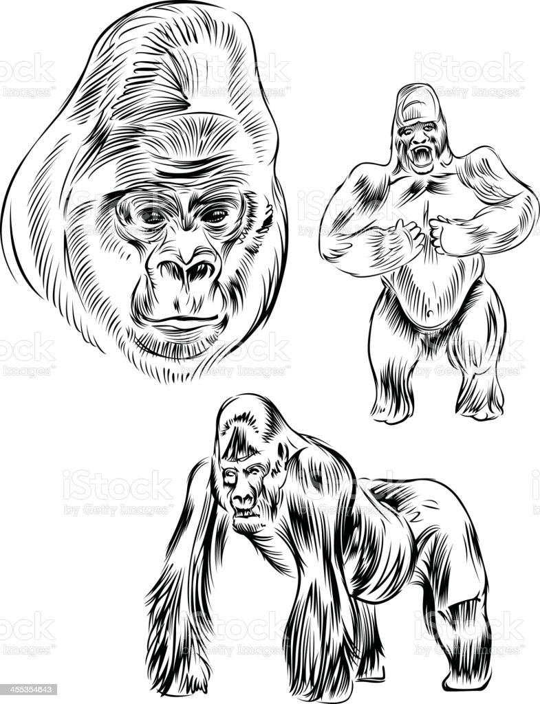 Line drawing of a gorilla vector art illustration