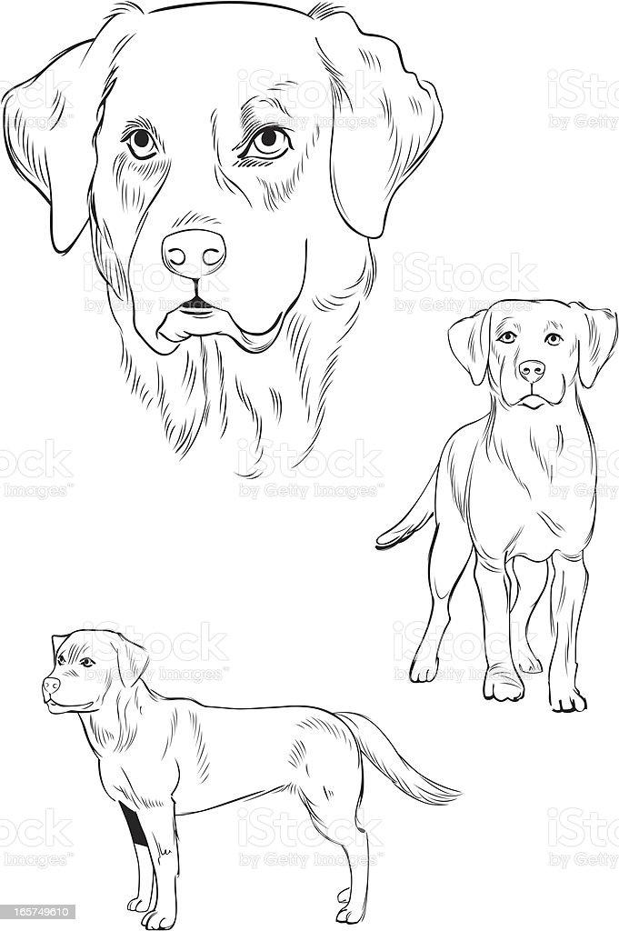 Line Illustration of Labrador dog royalty-free stock vector art