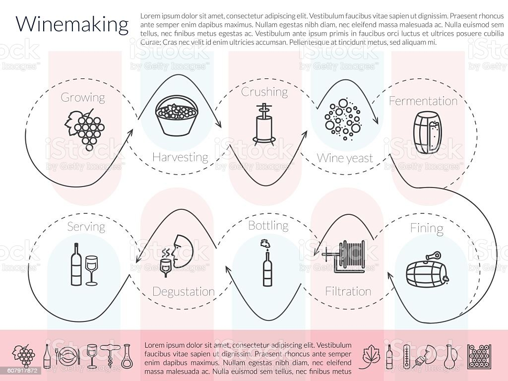 line winemaking infographic vector art illustration