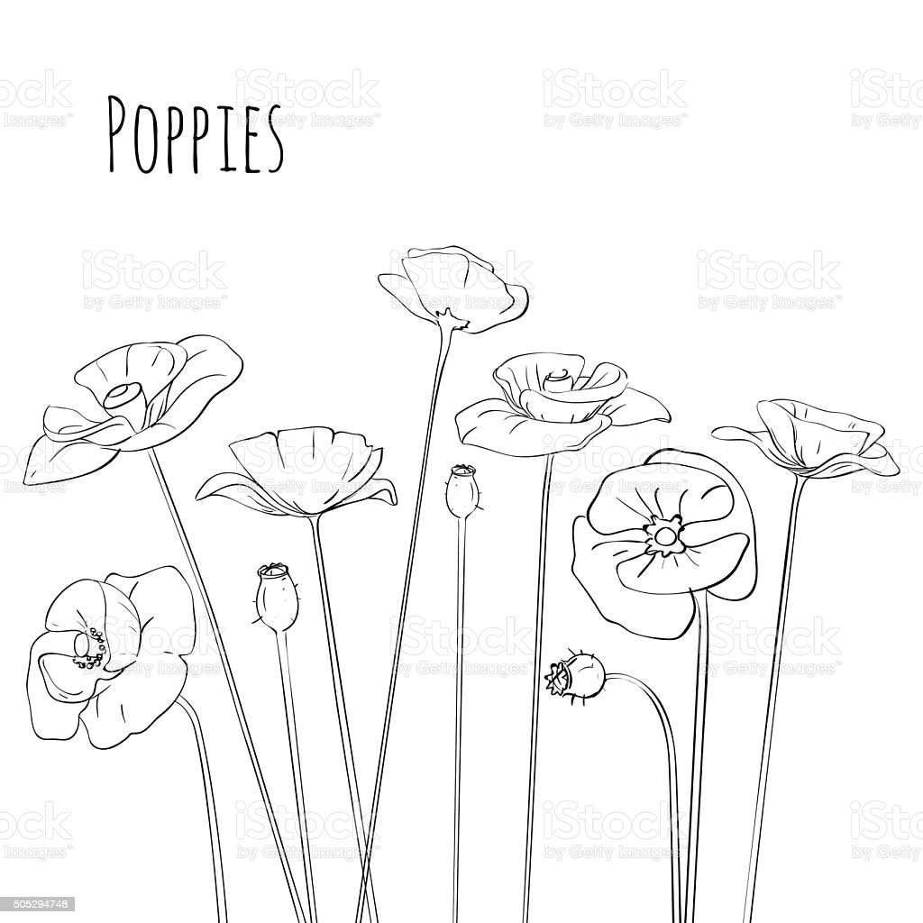 Line-art Poppies Isolated On White. Vector illustration vector art illustration