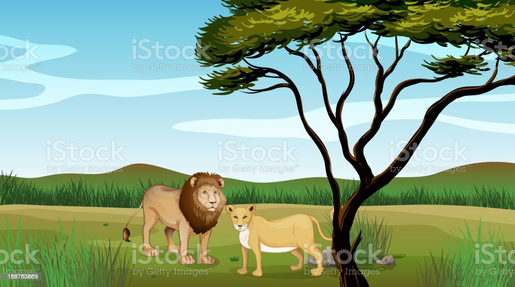 Lion and a tiger royalty-free stock vector art