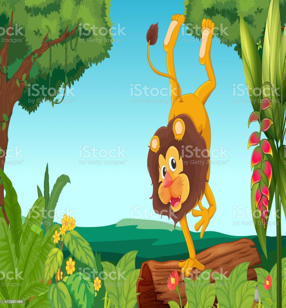 Lion showing off royalty-free stock vector art