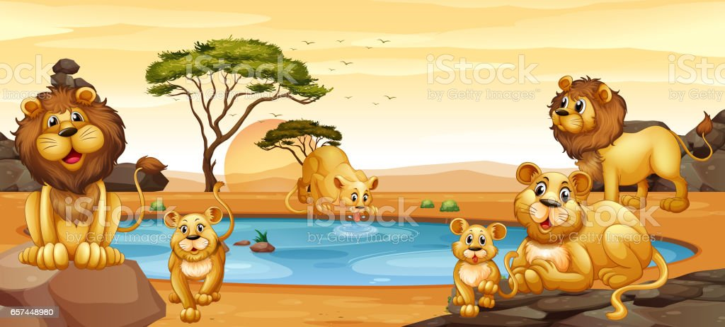 Lions living by the pond vector art illustration