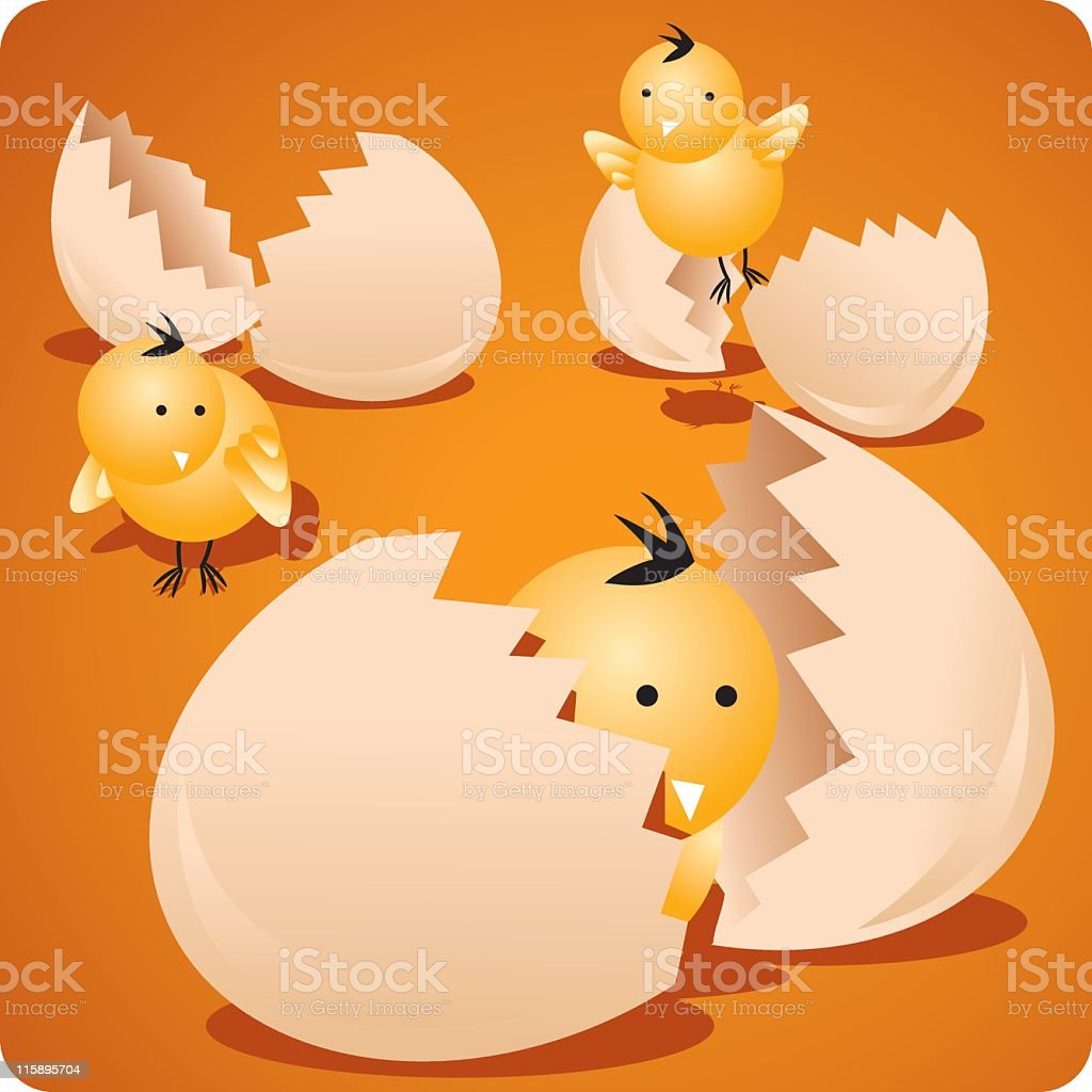 little chicks royalty-free stock vector art