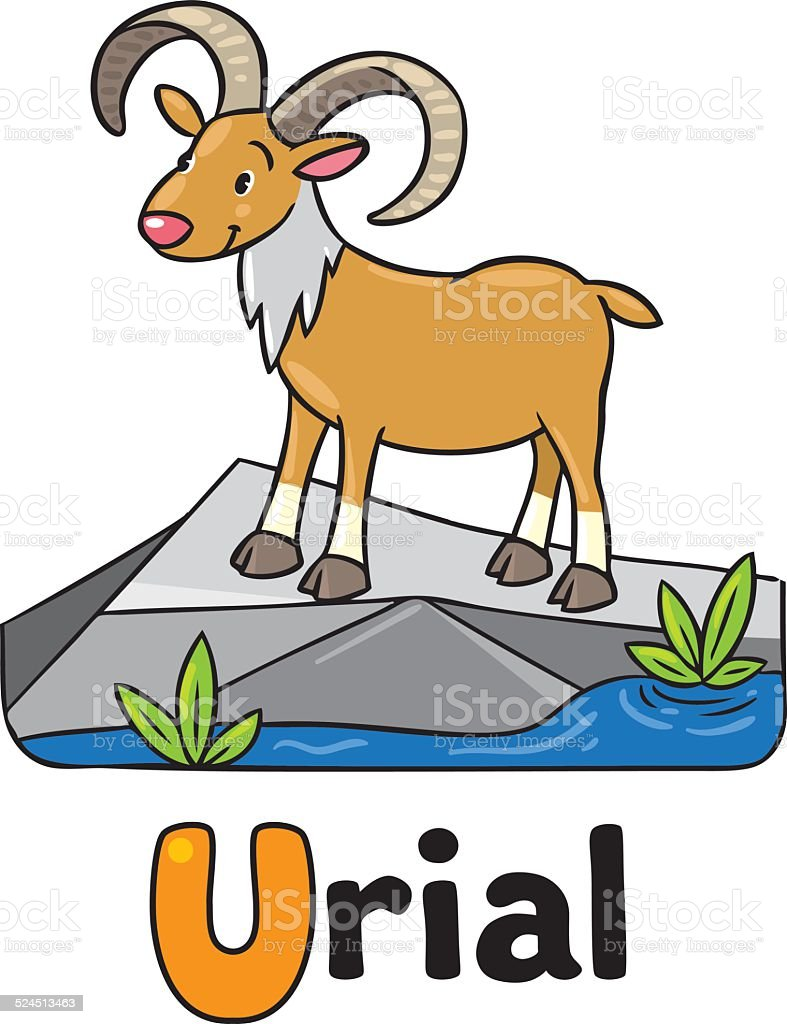 Little funny urial or ram, for ABC. Alphabet U vector art illustration