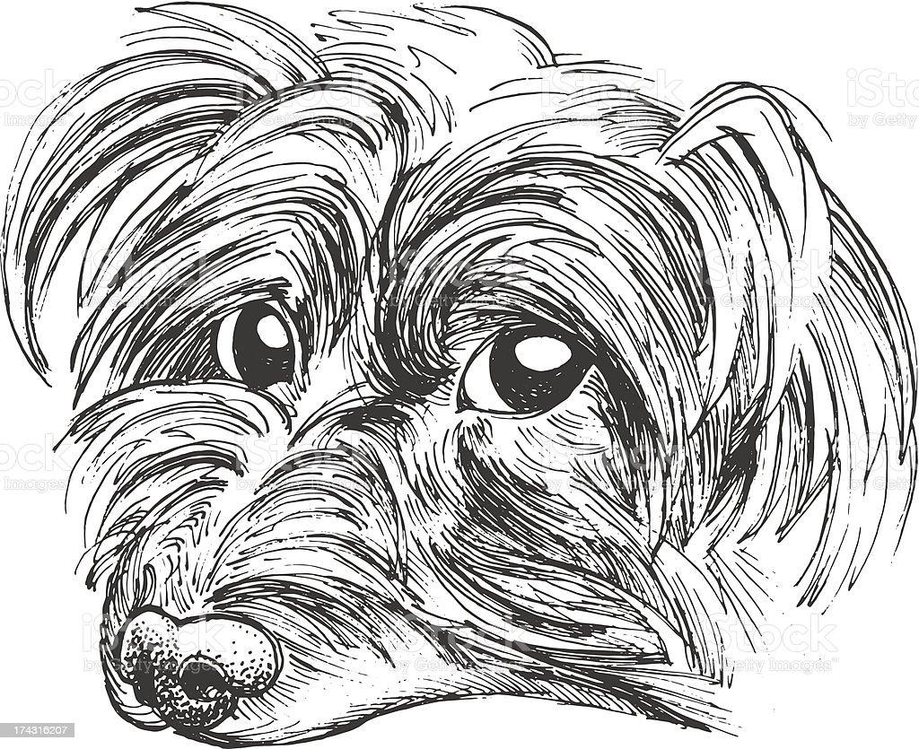 Little Yorkie vector art illustration