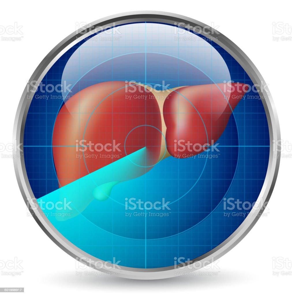 Liver examination vector art illustration