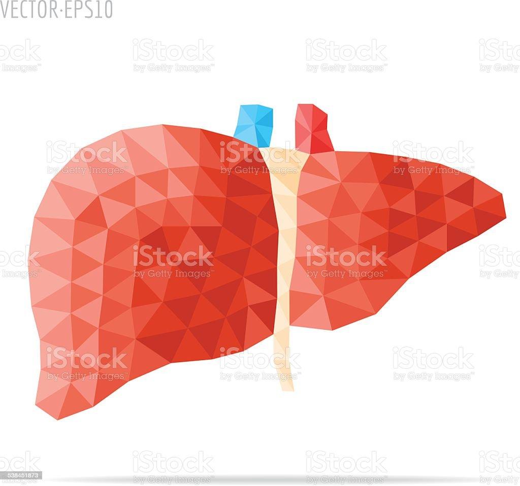 Liver faceted vector art illustration