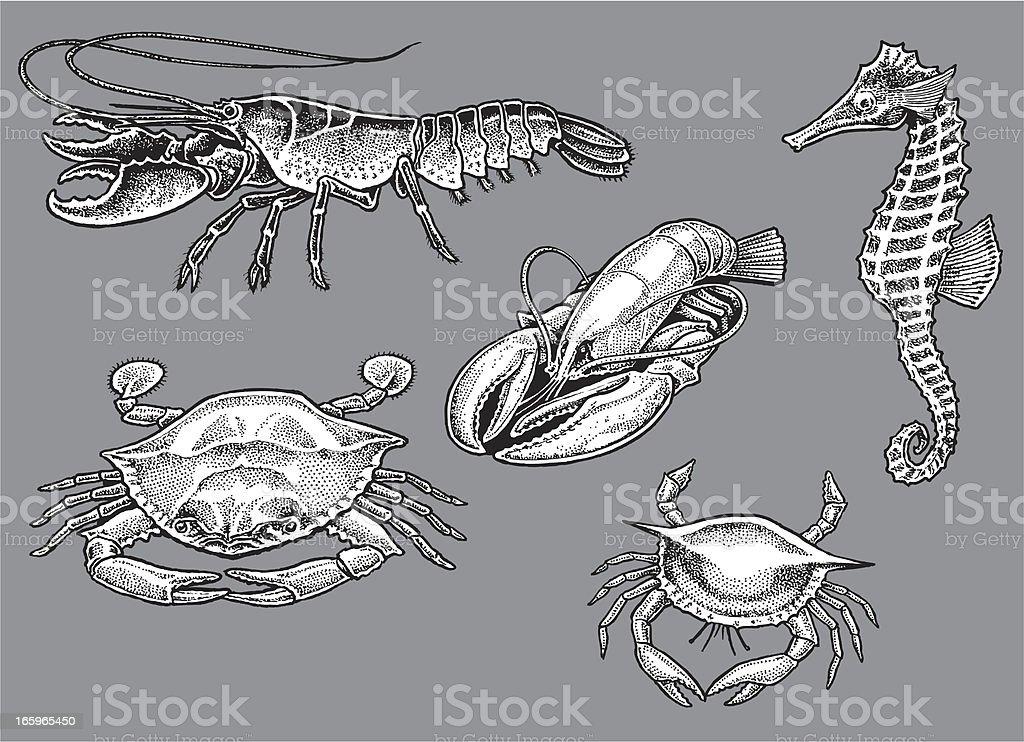 Lobster, Crab, Seahorse - Sea Life royalty-free stock vector art