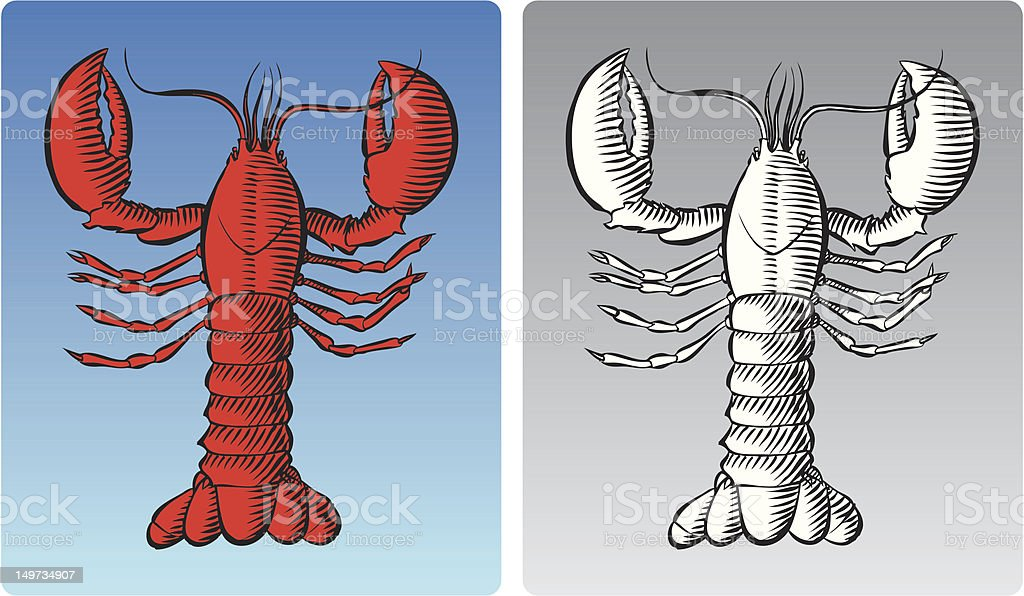 Lobster royalty-free stock vector art