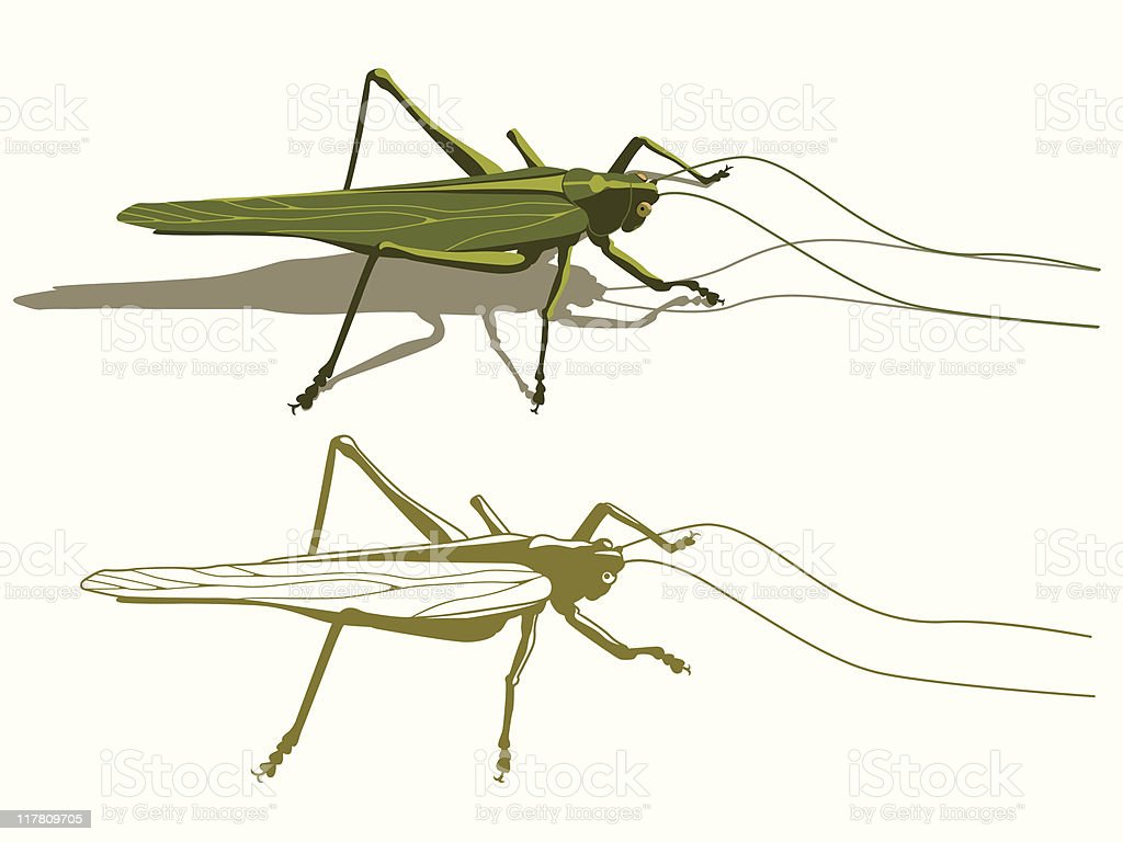 locust vector art illustration