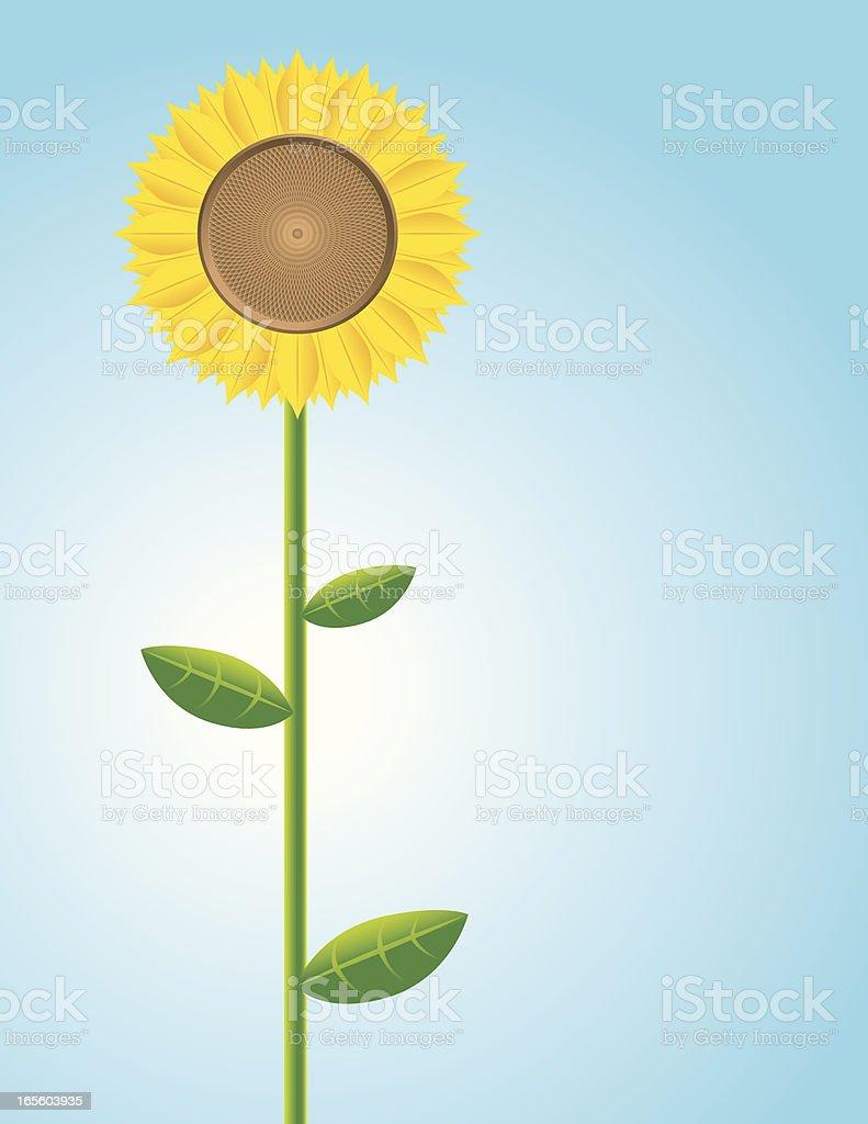 Lone sunflower royalty-free stock vector art