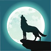 Lone Wolf Howling at the Moon