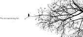 Lonely bird stands on a branch of a naked tree silhouette