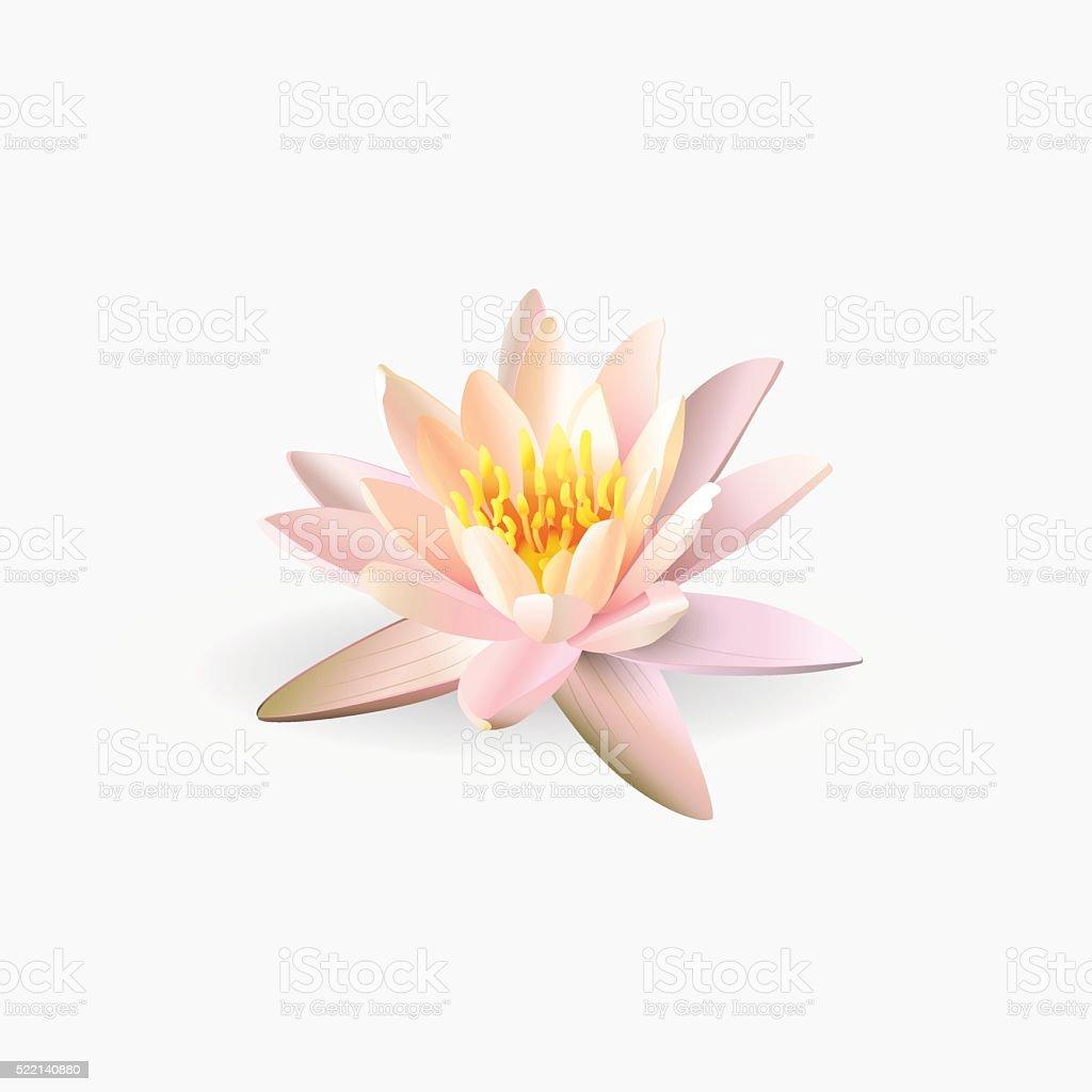Lotus flower isolated on white background. vector art illustration
