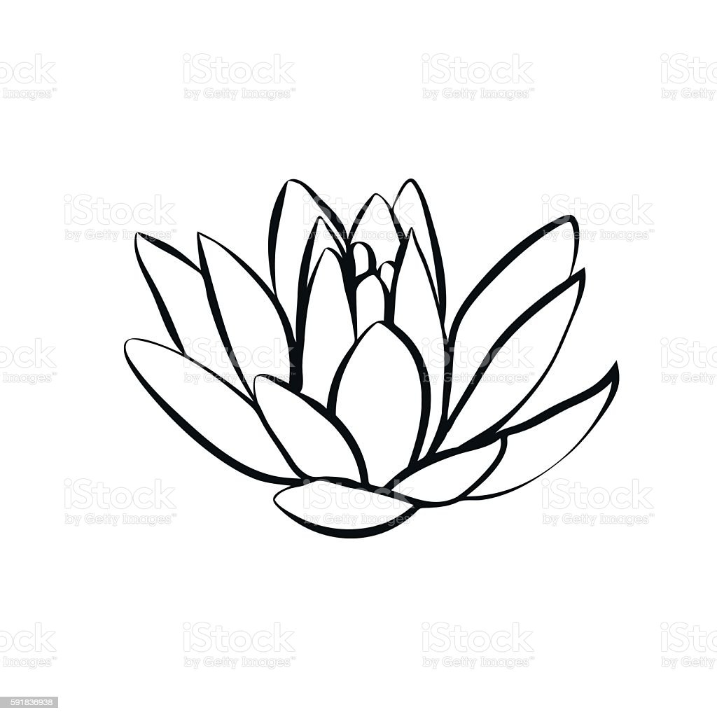 lotus flowers icon vector art illustration