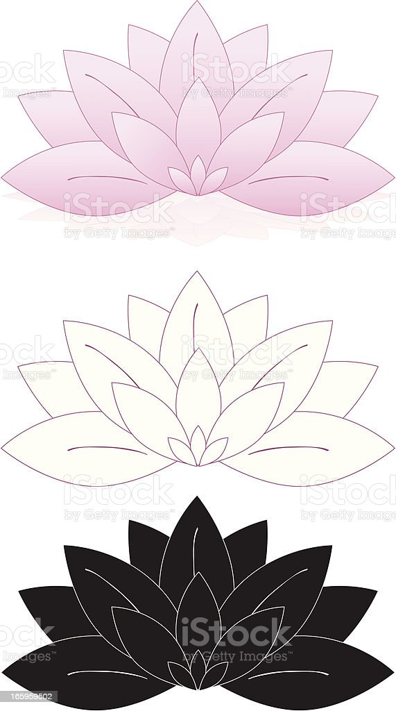 Lotus Flowers, Water Lilies Set (Pink, White, Black) royalty-free stock vector art