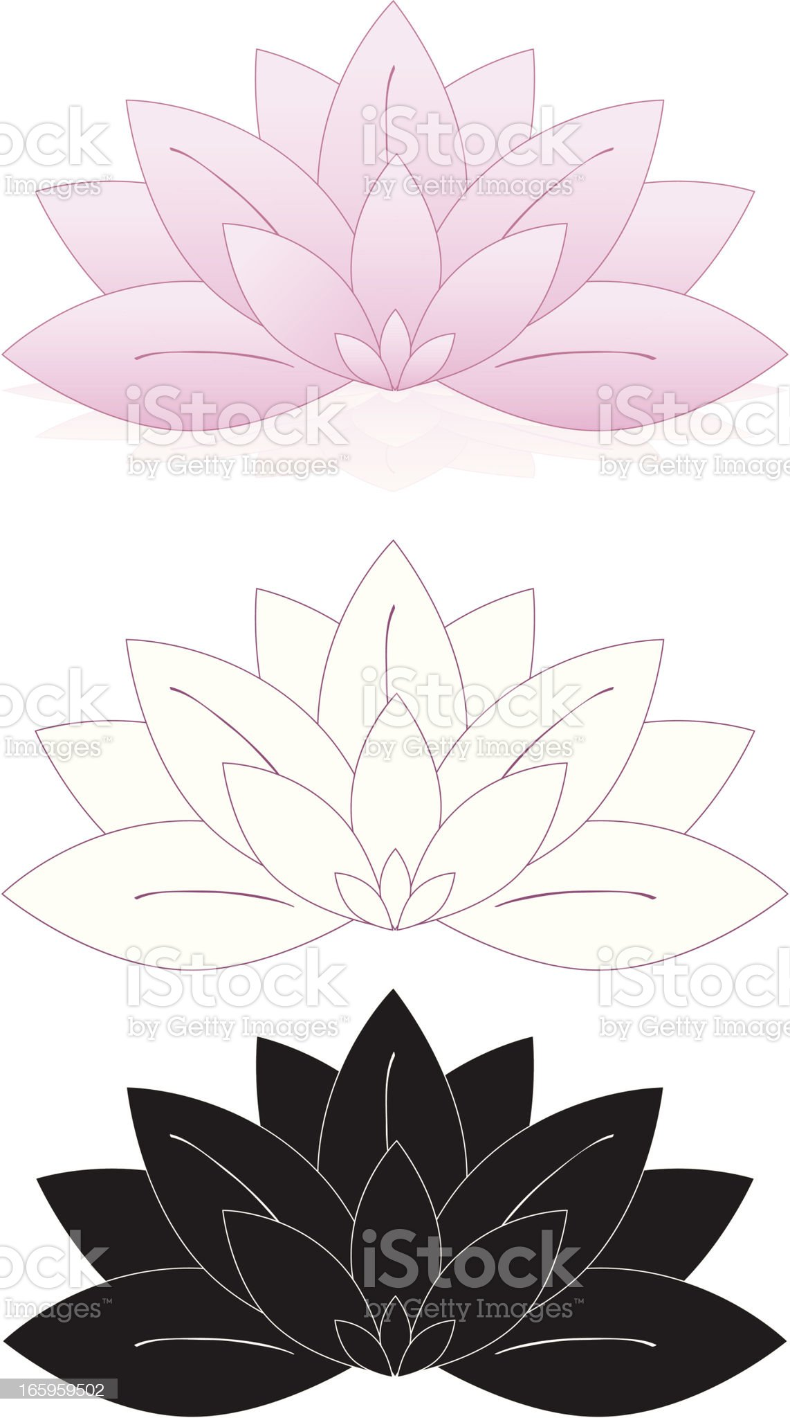 Lotus Flowers, Water Lilies Set (Pink, White, Black) royalty-free stock vector art