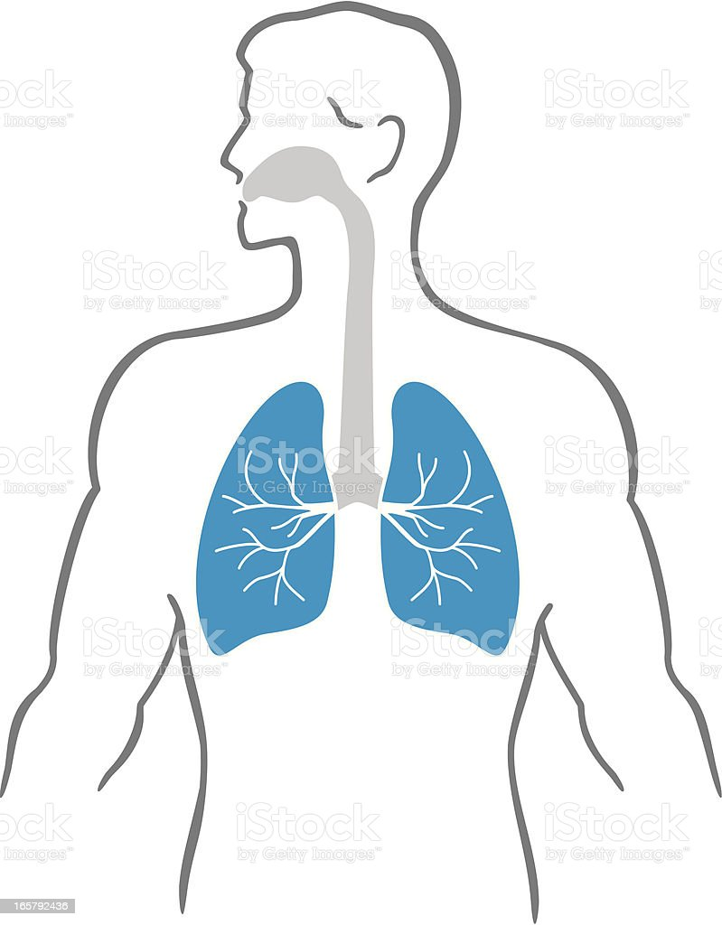 Lungs and human body royalty-free stock vector art
